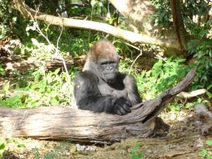 Monkey Jungle 006
